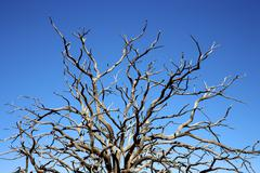 Bare branches of a dead tree reaching to a bright blue sky, utah, united stat Stock Photos