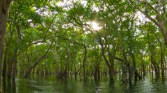 Flooded forest, the view from the boat. cambodia. Stock Footage