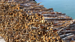 Heap of pulpwood for fire on display on the harbour of estonia gh4 4k Stock Footage