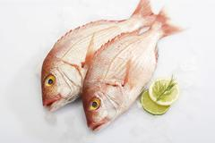 gilthead seabreams, dorade rose, on crushed ice - stock photo