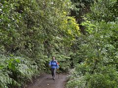 woman walking through a laurisilva, el canal y los tilos biosphere reserve, l - stock photo