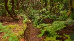 Bosque Encantado in Anaga Rural Park on Tenerife, Canary Islands Stock Footage