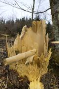 Tree felled by a storm, close-up Stock Photos
