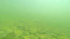 HD Underwater of Group of fish in the river Stock Footage