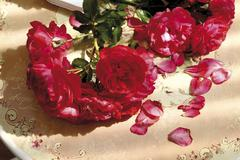 rose ambience - stock photo