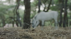 White horse in the forest. Shot 4k slow motion. Stock Footage
