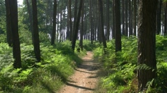 Darss Forest - Baltic Sea, Northern Germany Stock Footage