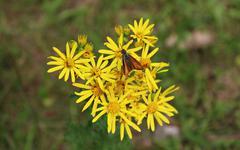 Bug and Yellow Shine Stock Photos