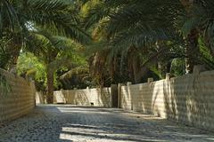 palm garden in the al ain oasis, emirate of abu dhabi, united arab emirates,  - stock photo