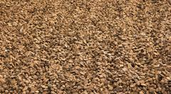 huge amount of brazil nuts - stock photo