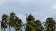 Palms at Hurricane. Bad Windy Weather in Tropics. Stock Footage