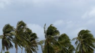 Stock Video Footage of Palms at Hurricane. Bad Windy Weather in Tropics.