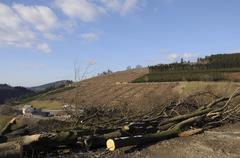 Cleared area following storm damage after the kyrill storm in sauerland, nort Kuvituskuvat