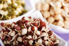 Chick pea, mung bean and azuki bean sprouts Stock Photos