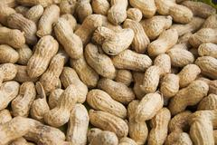 peanuts or groundnuts (arachis hypogaea) - stock photo
