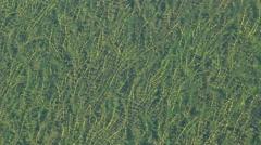 Texture grass under water Stock Footage
