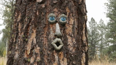 Tree Face Stock Footage