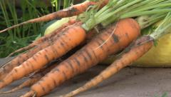Closeup: Freshly harvested carrots tracking shot Stock Footage