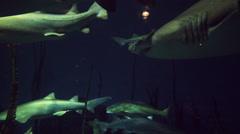 Sharks swim in aquarium 3 Stock Footage