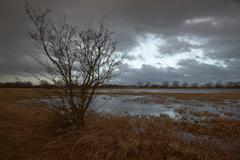 Flooded meadows, wuemmewiesen nature reserve, bremen, germany, europe Stock Photos