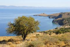 Solitary tree on a rocky coast near tsichranda, lesbos island, aegean sea, gr Stock Photos