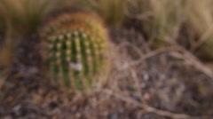 Cactus Closeup - stock footage