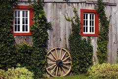 Vine covered shed with old wooden wagon wheel, quebec, canada Kuvituskuvat