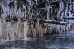 Icicles on stored trunks, yellow colouring from tannin in the tree trunks, sa Stock Photos