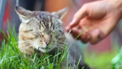Hand awakes and pets adorable domestic cat lying on grass, click for HD - stock footage