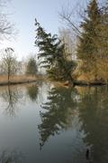 Tilted tree and reflections in the schmutter river close to augsburg, bavaria Stock Photos
