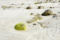Seabed at low tide revealing bolders covered with green algae and structured  Stock Photos
