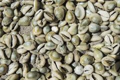 Cypraeidae shells, matemo island, quirimbas islands, mozambique, africa Stock Photos