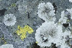 Lichen on granite rock, norway Stock Photos