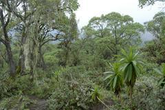 Pristine jungle montane forest mount kenya national park kenya Stock Photos