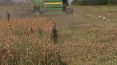 Harvester machine trash peas plants in agricultural field Stock Footage