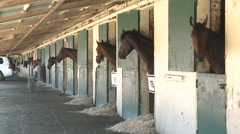 Horses in stables - stock footage