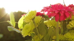 Sunflares behind flowers swaying in the wind Stock Footage