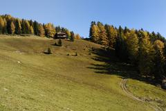 forest in autumn and grassland with barrack on the hill, puster valley, south - stock photo