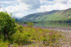 Lake District mountains and pink flowers Maiden Moor Derwent Water The Lakes - stock photo