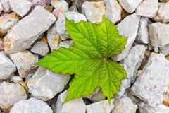 Stone and leaf  - background Stock Photos