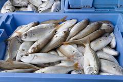 Fresh seafish in a box Stock Photos