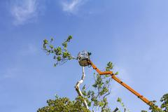 trimming trees with a chainsaw - stock photo