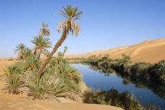 Phoenix dactylifera palm trees grow at the shore oasis um el ma mandara libya Stock Photos