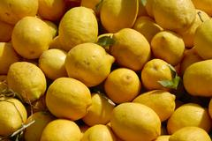 Yellow lemons at a market casablanca morocco Kuvituskuvat