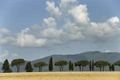 alley of pines and cypresses in front of hills, province grosseto, tuscany, i - stock photo