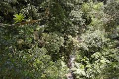 rainforest, view from arenal hanging bridges, costa rica - stock photo
