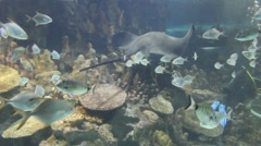 Stingray fish Stock Footage