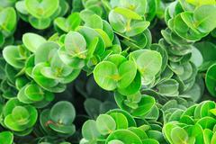 green leaf background on spring season - stock photo