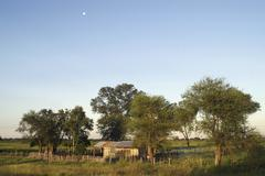 Stock Photo of wooden house, gran chaco, paraguay