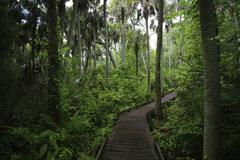 last subtropical rainforest in florida, alexander springs, ocala forest, flor - stock photo